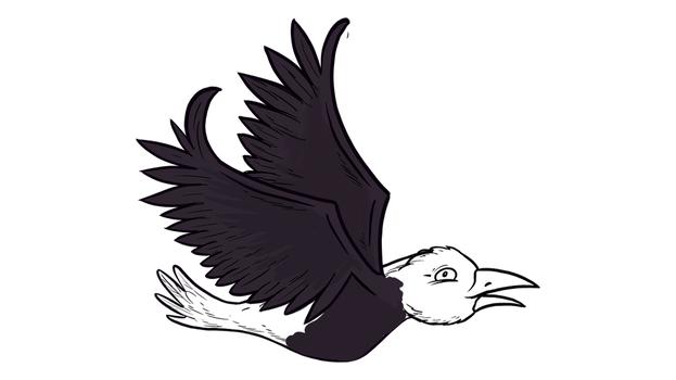 Hansje, de vogel van Tim