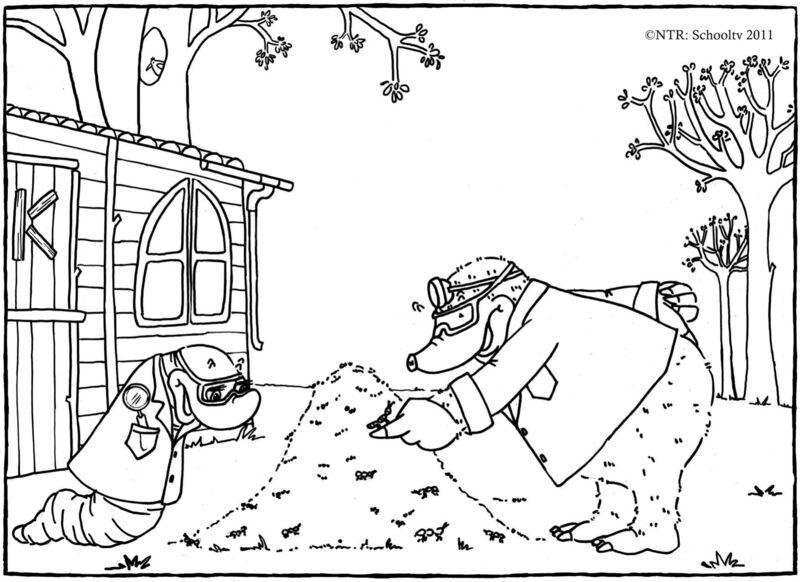 Koekeloere - mierenhoop