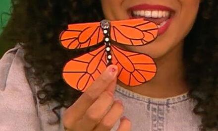 Zin in Zappelin - vlinder